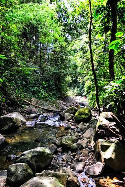 stream rain forest hike 600px CR