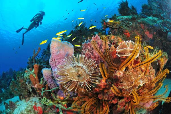 martinique diving and water sports