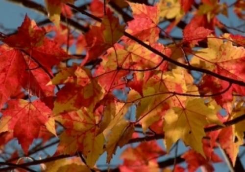 Vacation in Autumn Colors…