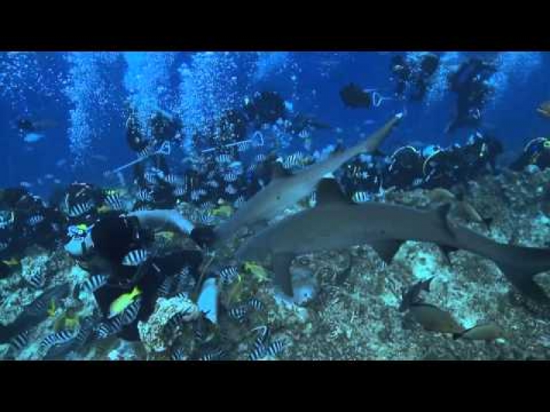 The Best Diving Adventure Ever - Sharks