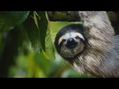 Save the Americans: Costa Rican Animals for the Overworked