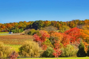 Best Places to Visit for Fall Foliage in U.S.A