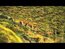 Chile Travel - Chile Promotional Video