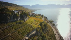 Lavaux, Vineyard Terraces - A landscape shaped by people