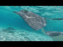 Stingray City Amazing Grand Cayman Excursion
